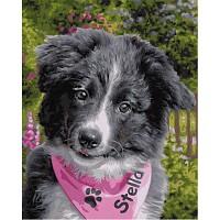 Schipper Malen nach Zahlen Border Collie Puppy 24 x 30 cm